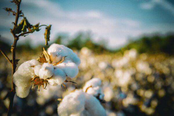 bawełna - wysokiej klasy batystowa bawełna egipska kołdra zimowa Notta Luna